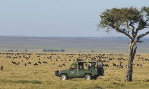 Kenya:  Lucy och ankomst Masai Mara
