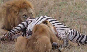 Tanzania: Ankomst Serengeti