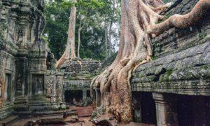 Kambodja: Siem Reap och Angkor: Musik vid templen