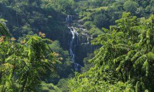 Sri Lanka –Ella med Little Adams Peak och Nine arch bridge