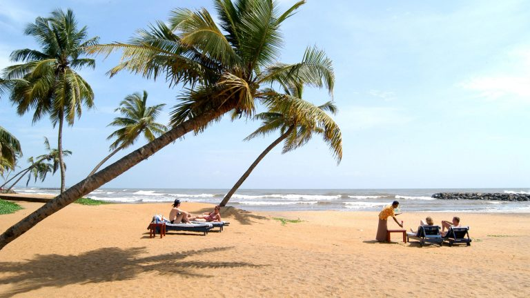 palmer och strand med solbadande turister