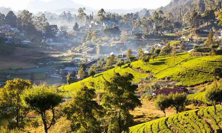 Utsikt över bergen i staden Nuwara Eliya